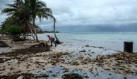 Organizaciones que integran 10xMexicoNatural lamentan la superficialidad con que se trataron los temas ambientales por los cuatro candidatos a la Pre