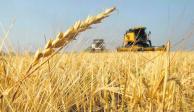 Cuadriplica México en 5 años importación de trigo ruso