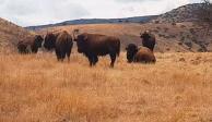 Aseguran otros 4 ranchos a César Duarte con bisontes, llamas...