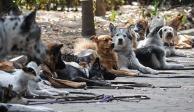 Aumenta robo y secuestro de perros en la CDMX