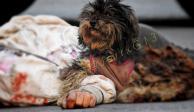 Conmueve perrita que no dejó a su dueño, quien murió atropellado