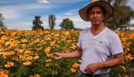 Cempasúchil, invitada de honor en el Festival de las Flores en Hidalgo