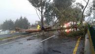 Lluvia y vientos en el Valle de México dejan árboles caídos y complican tránsito