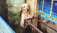 perro inundaciones