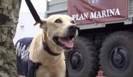 Perro rescatado por la Marina en Tabasco