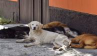 perros-calle-méxico