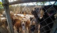 Donan comida a perritos