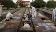 Brasil exhuma tumbas antiguas para muertes por COVID
