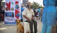 perro y anciano