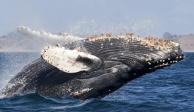 avistamiento-de-ballenas-2020