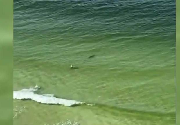 """Captan a un tiburón a punto de """"atacar"""" a bañista en Florida"""