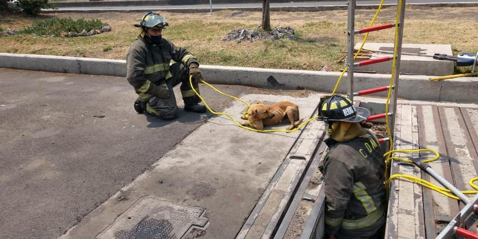 bomberos rescatan a un perrito