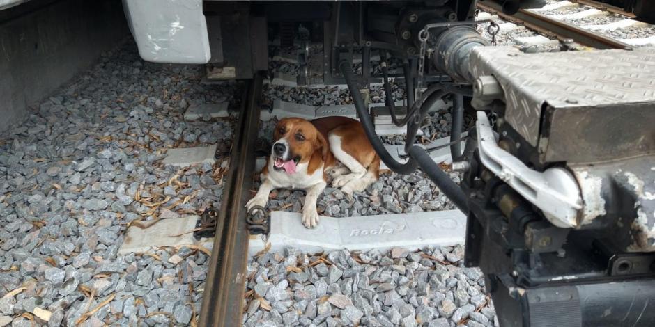 Recatan a perrito de las vías del Tren Ligero