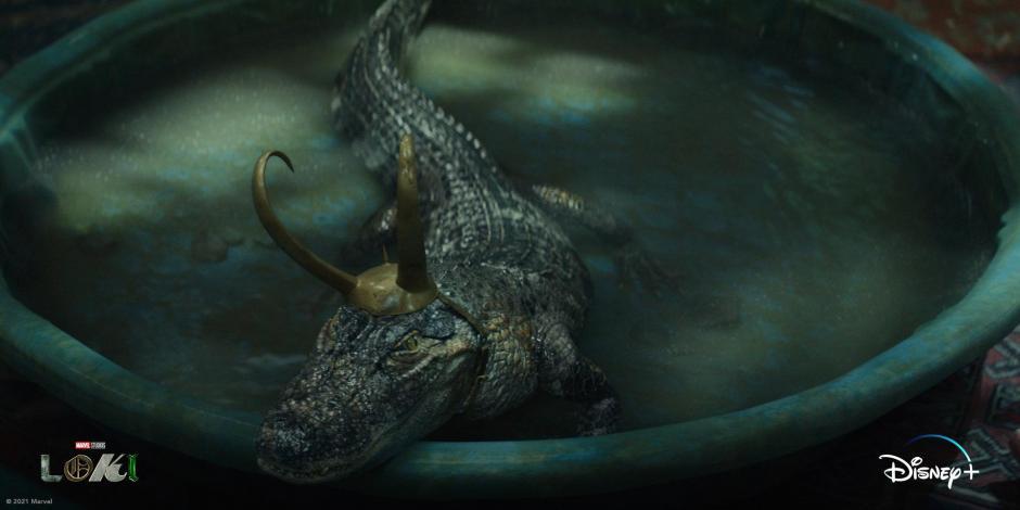 loki cocodrilo