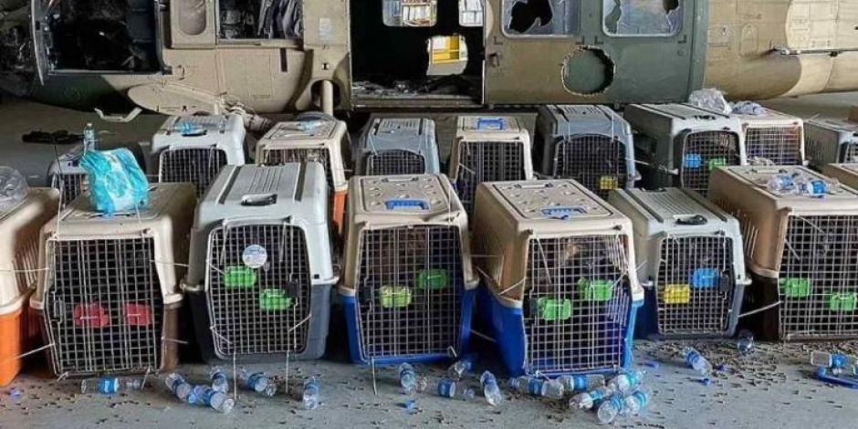 El Pentágono respondió luego de la fuerte acusación sobre los perros, hacia Joe Biden y el ejército de EU