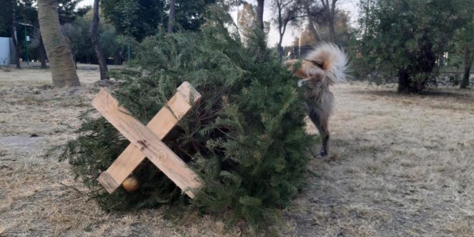 Convierten Bosque de Aragón en basurero navideño