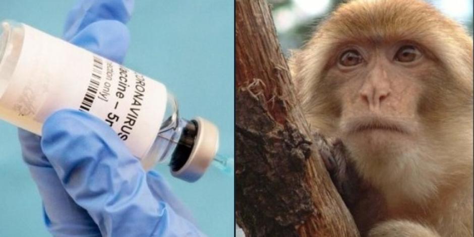 Empresa china prueba con éxito en monos vacuna contra COVID-19