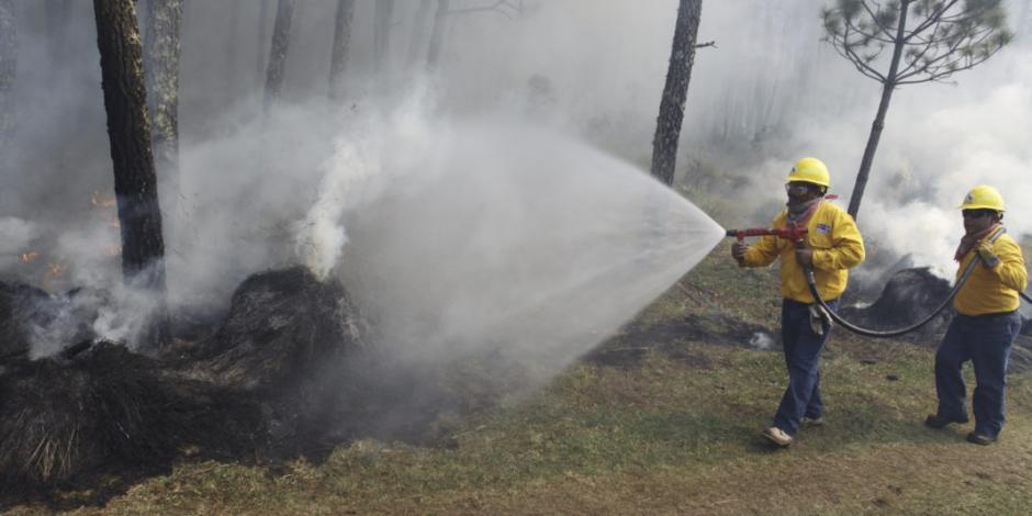 Veracruz registra tres incendios en lo que va del año, uno sigue activo