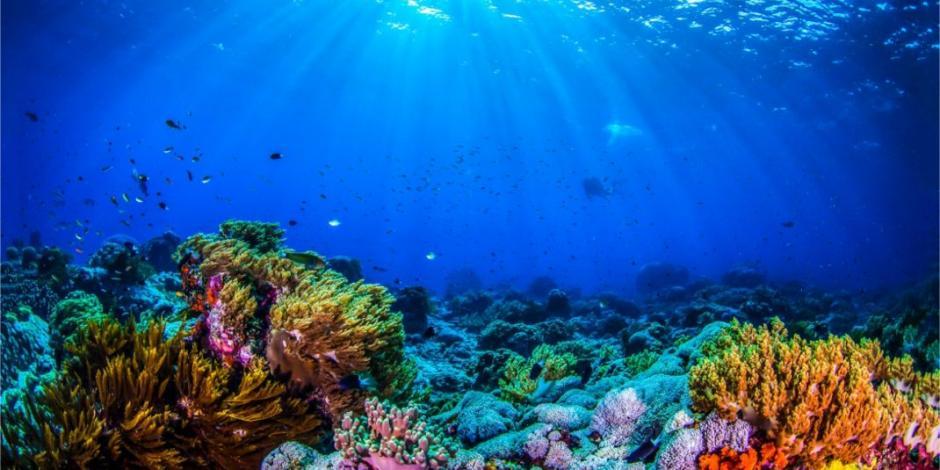 Cuidarán arrecifes de Cancún y Riviera Maya con ayuda de robots
