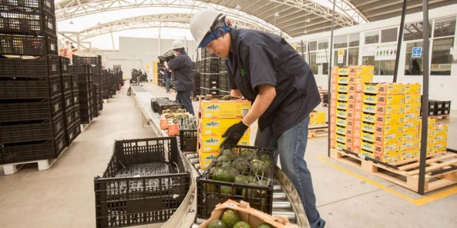 Destinará Sader 199 mdp a 44 mil productores de Quintana Roo