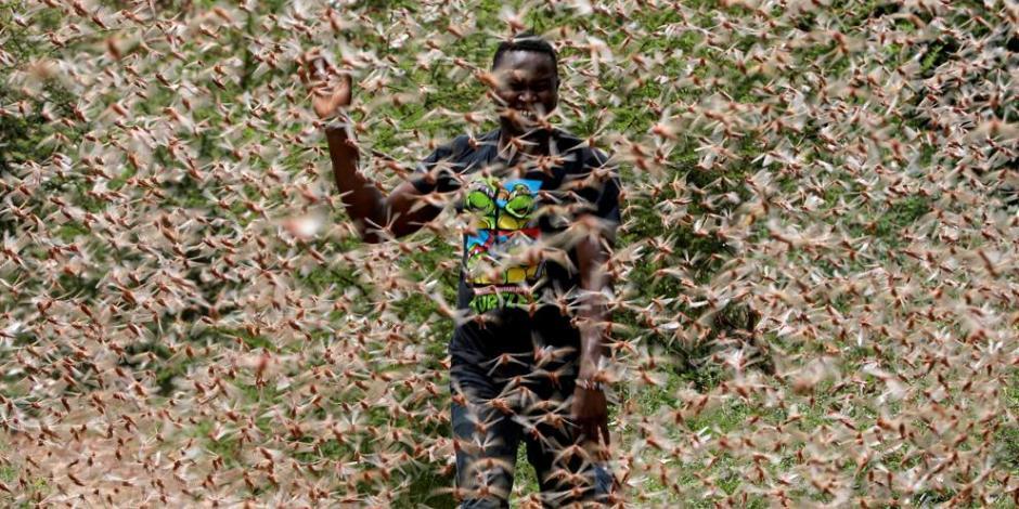 Urge ayuda internacional por invasión de langostas en África (FOTOS)