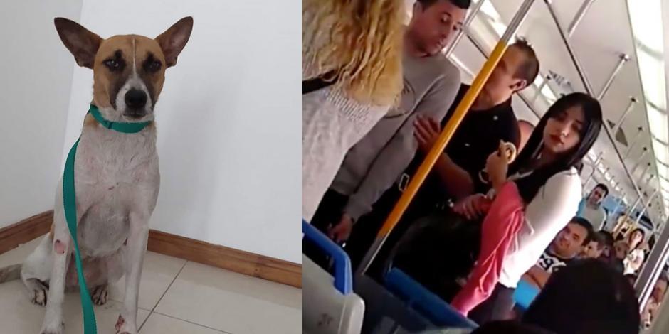 Mujer patea a perrita callejera en tren y desata el enojo de pasajeros (VIDEO)