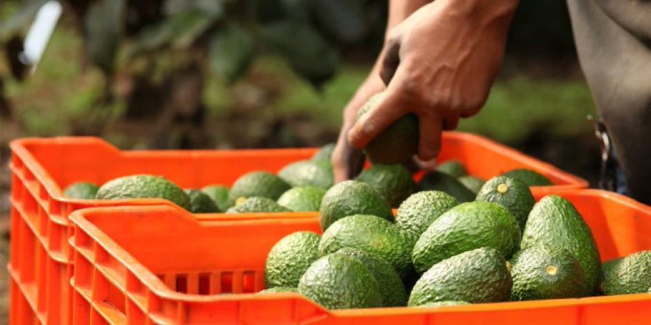 Crece 19.64% la balanza agroalimentaria de México