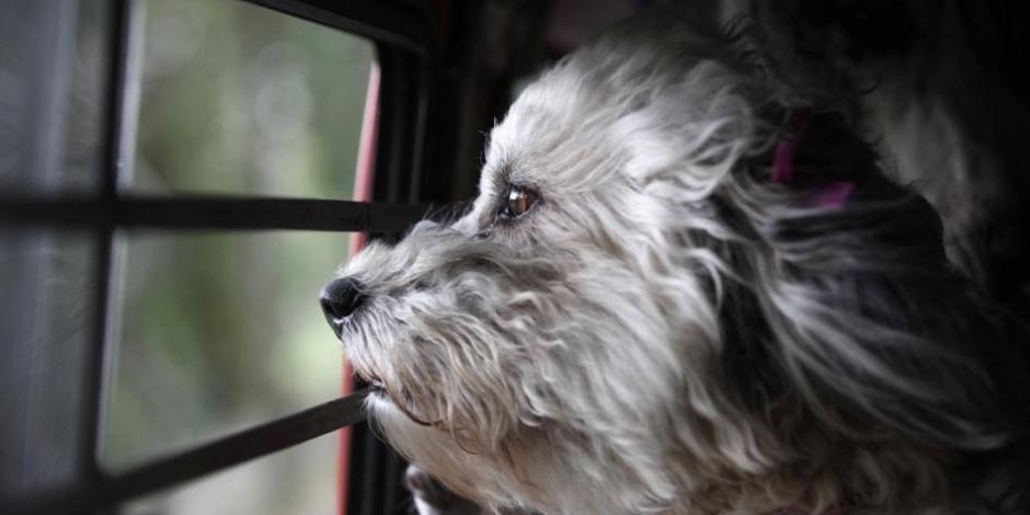 Denuncian 3 métodos de robarse a los perros