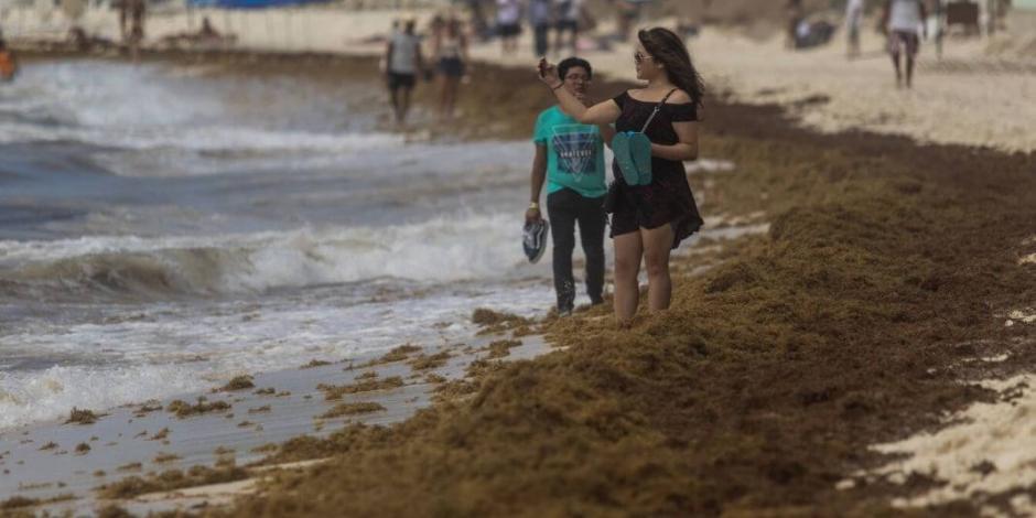 Descartan llegada de sargazo a playas mexicanas en mayo