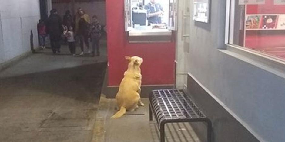 Güero, el perro callejero que va diario a cenar a un KFC