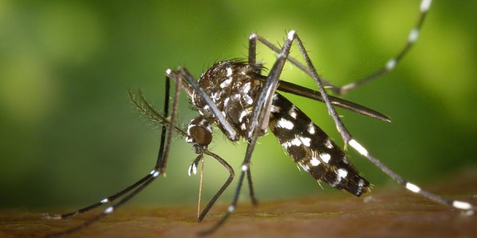 Urge PRD alerta sanitaria por dengue; suman 89 muertos en 2019