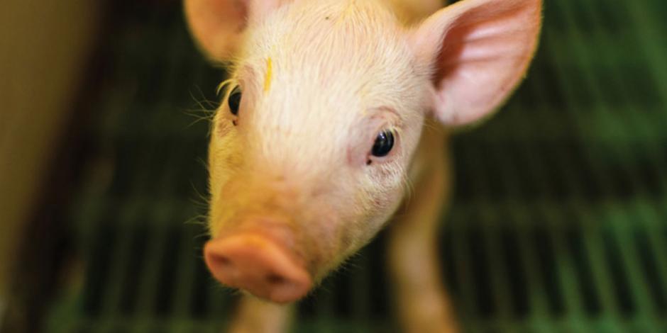 WAP-US-Pork-Report-11_2019FINAL-SPA-2019.11.25