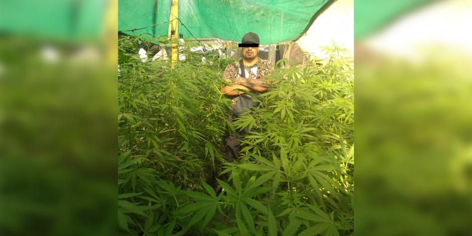 Tras captura de líder, ubican plantíos de mariguana del Cártel de Tláhuac