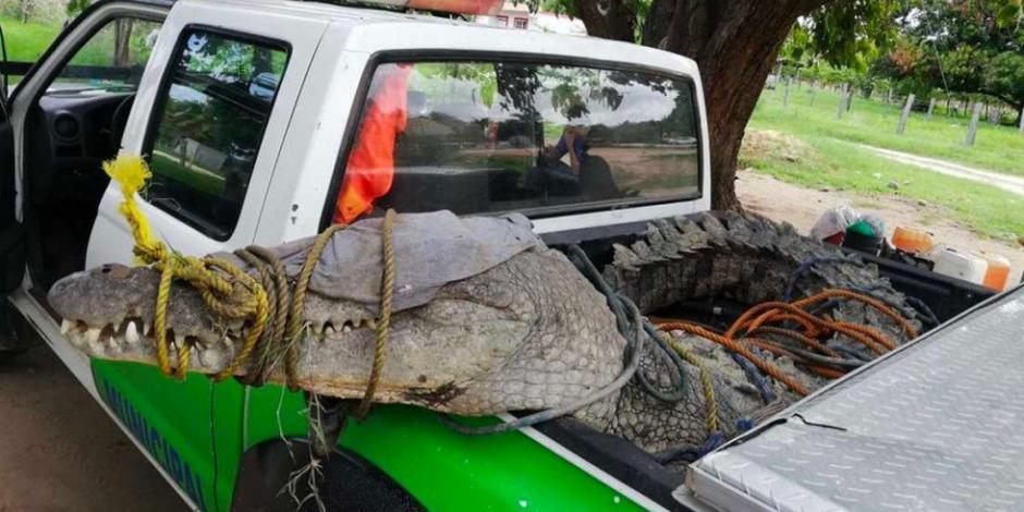Hombre sobrevive a ataque de cocodrilo en costas de Oaxaca