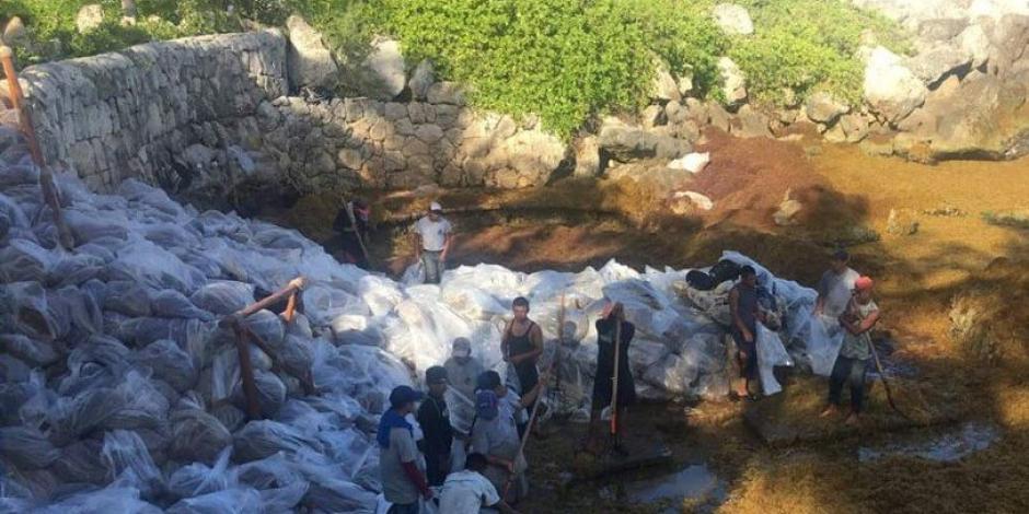 Xcaret arriesga ecosistema marino por recolecta irregular de sargazo