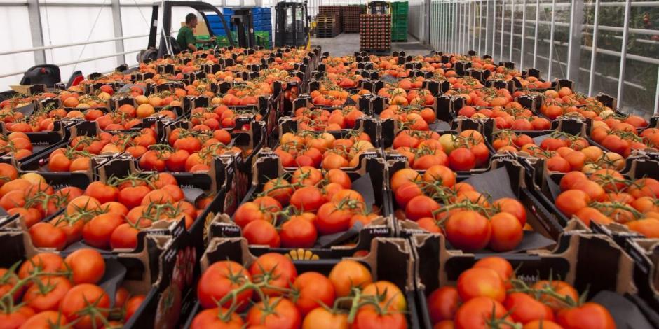 Finaliza guerra del tomate;México y EU logran acuerdo para evitar aranceles