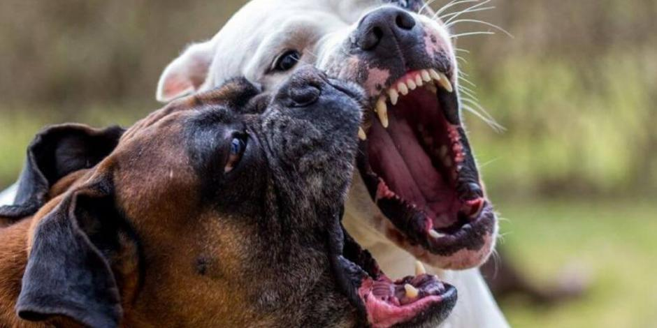 Niña en Detroit muere por ataque de perros; detienen al dueño