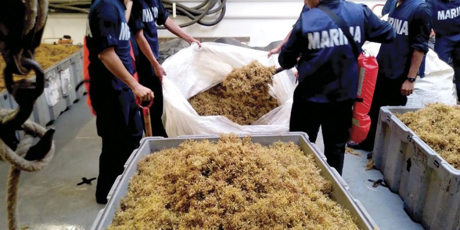 Marina recolecta 69 mil toneladas de sargazo en 3 meses