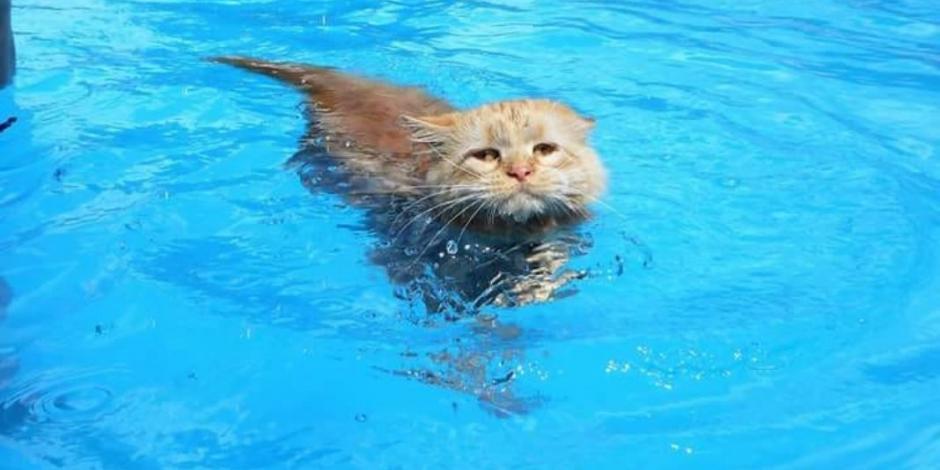 Gatita se mete a nadar y demuestra que no todos le temen al agua
