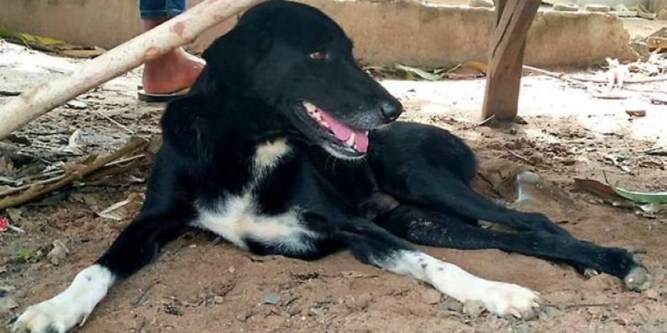 Ping Pong, el perro que rescató a un bebé al que su madre enterró vivo