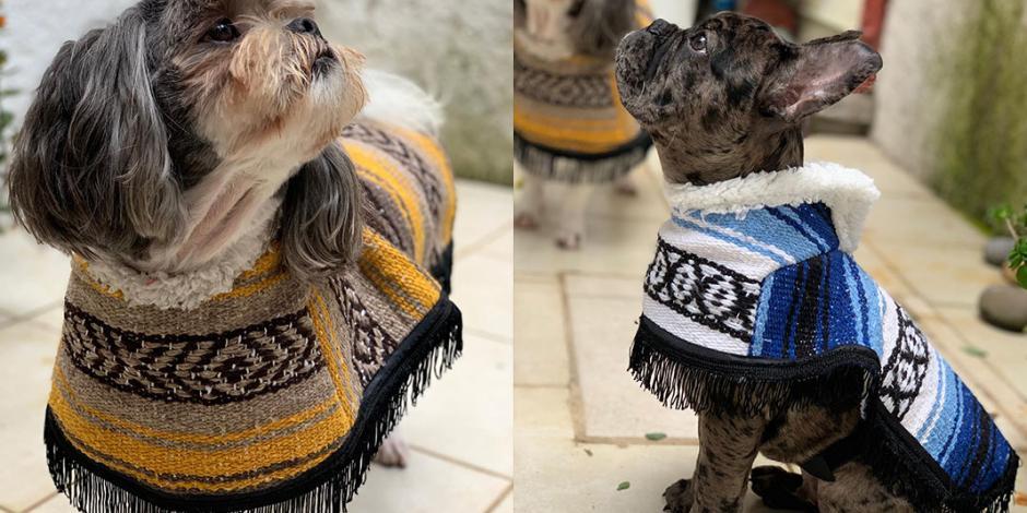 Guagorongos, las prendas más chic para quitarle el frío a los perros