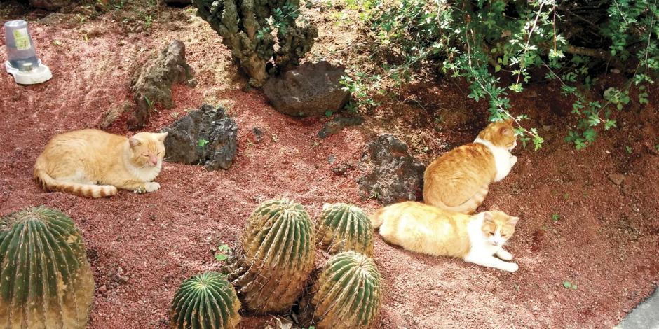 A gatitos de Palacio sí los atiende la UNAM