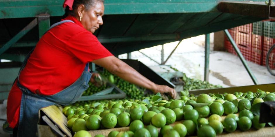 Expande agro michoacano proyectos dirigidos por mujeres