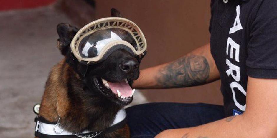 Muere Chichí, uno de los perros rescatistas del 19S