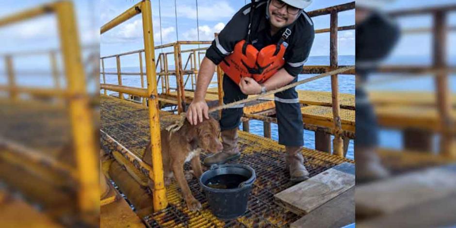 Rescatan en plataforma petrolera a un perro que nadó 220 kilómetros