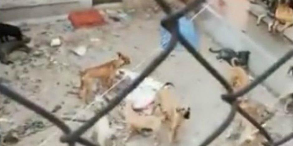 Rescatan a 20 perros hacinados en casa de colonia Lindavista