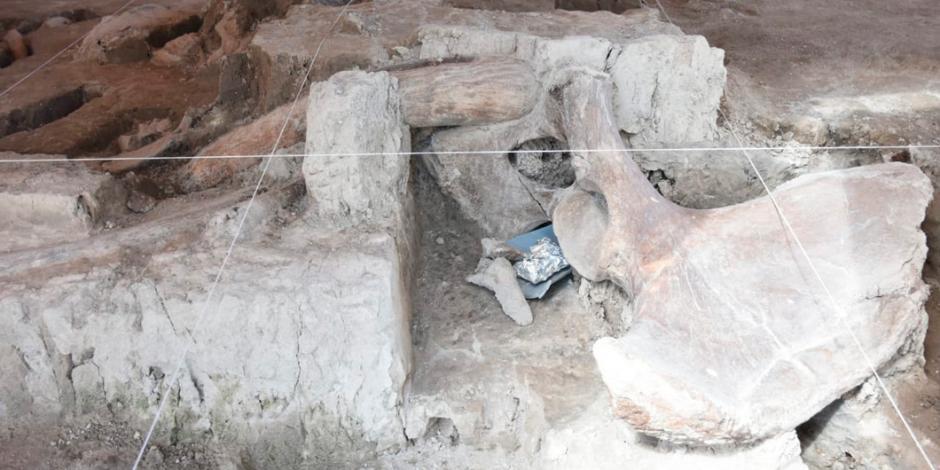 Hallan 800 huesos de 14 mamuts en Tultepec (FOTOS)