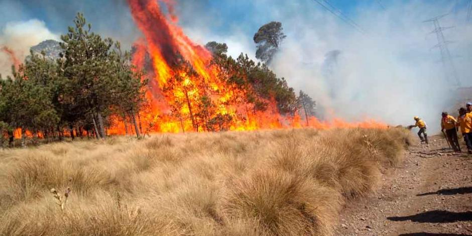 Estos son los 22 incendios que provocaron la emergencia ambiental