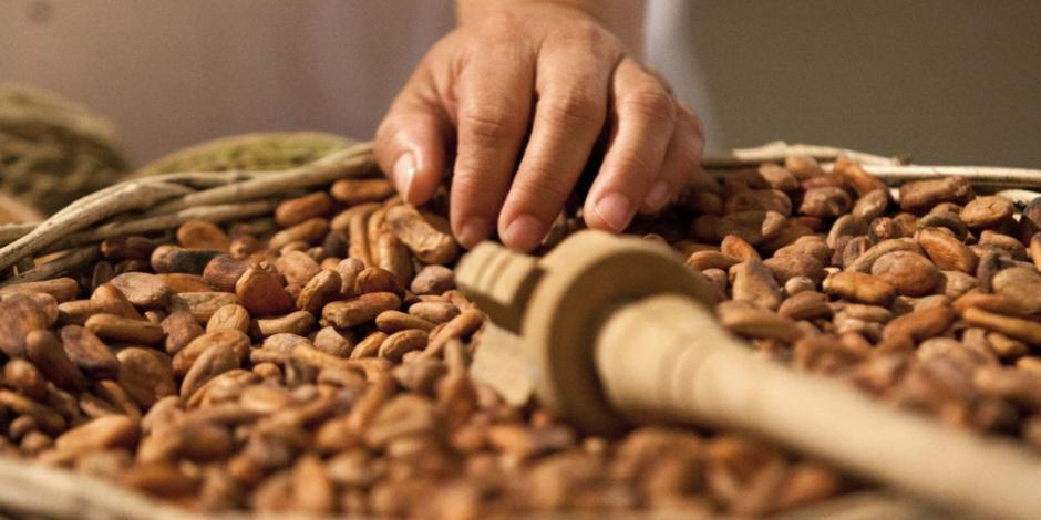 Descubre por qué el cacao puede ser la clave de la felicidad