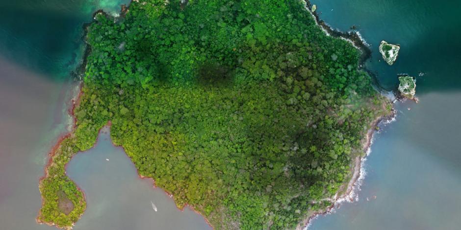 Isla Boná, el impresionante santuario de aves en el Pacífico (VIDEOS)